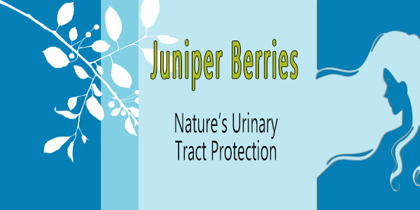 Juniper Berries are Great for Your Kidneys, Bladder and Urinary tract